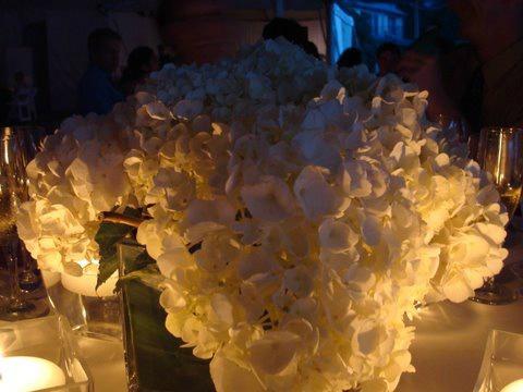 Hydrangeas in square vases