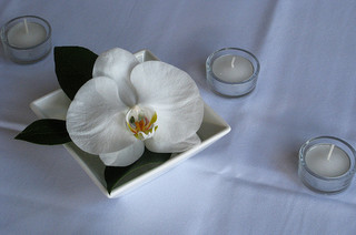 white orchid flower on white plate