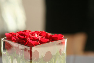 red roses in a cube vase