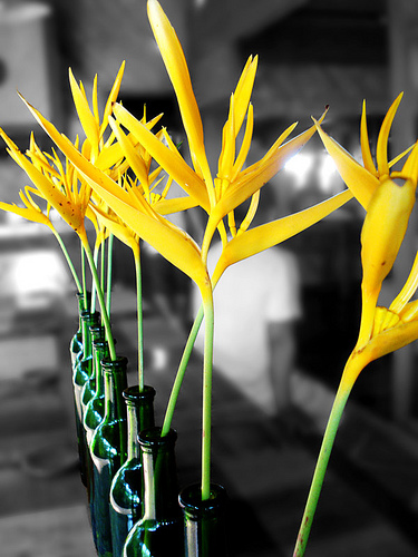 yellow bird of paradise flowers in green bottles
