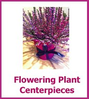 inexpensive plant centerpieces