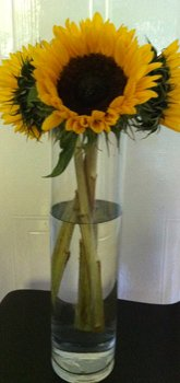 sunflowers in tall cylinder vase
